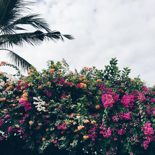 LaLuciola Bali